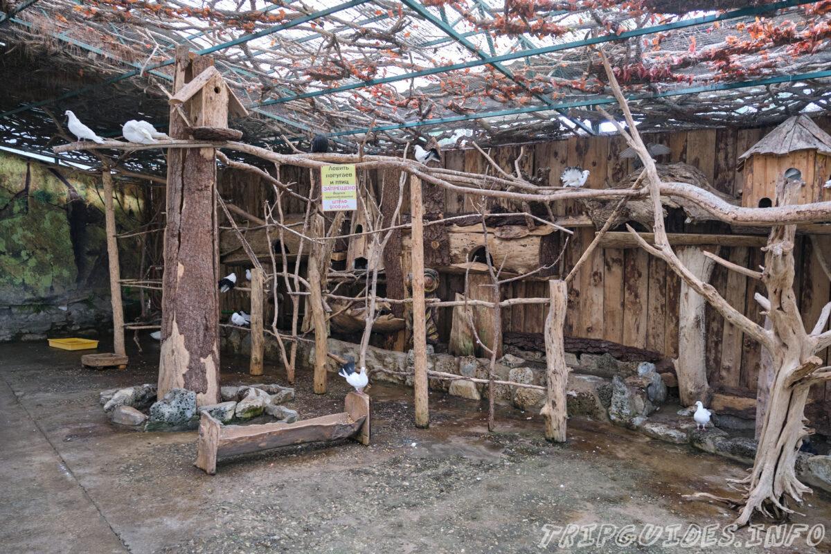 Зов Джунглей - Контактный зоопарк в Геленджике - вольер с птицами