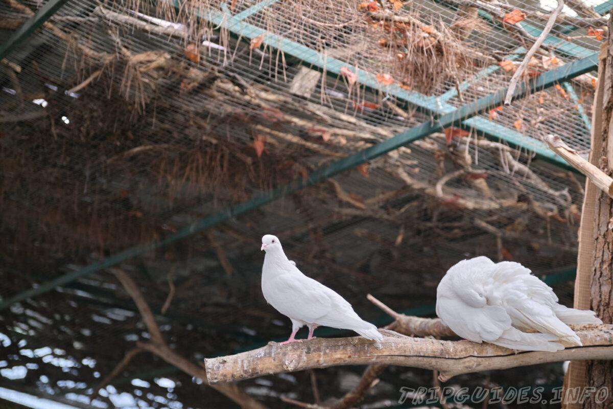 Зов Джунглей - Контактный зоопарк в Геленджике - Голуби