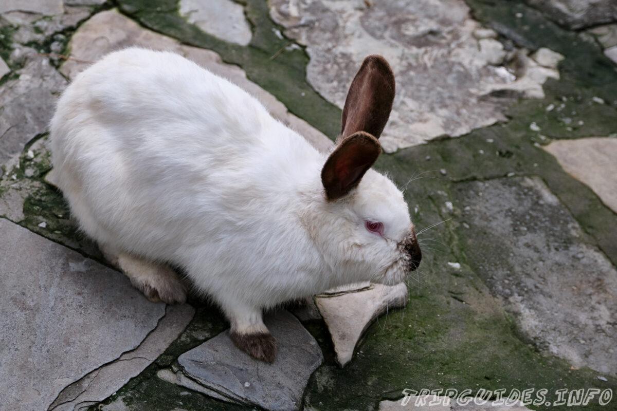 Зов Джунглей - Контактный зоопарк в Геленджике - Зайцы