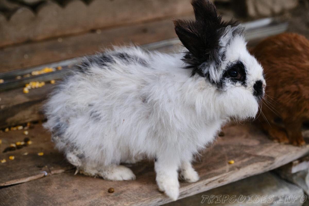 Зов Джунглей - Контактный зоопарк в Геленджике - Кролики