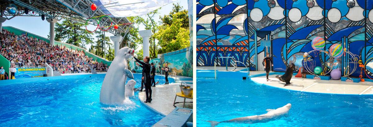Большой Сочинский дельфинарий Сочи - Ривьера