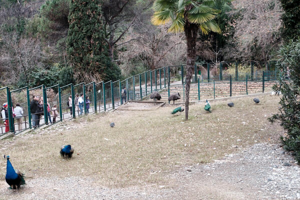 Сочинский дендрарий - страусиная ферма