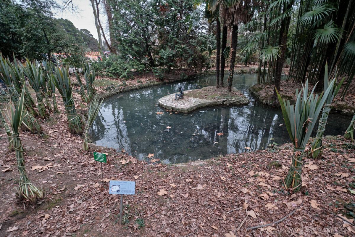 Сочинский дендрарий - нижний парк - пруд
