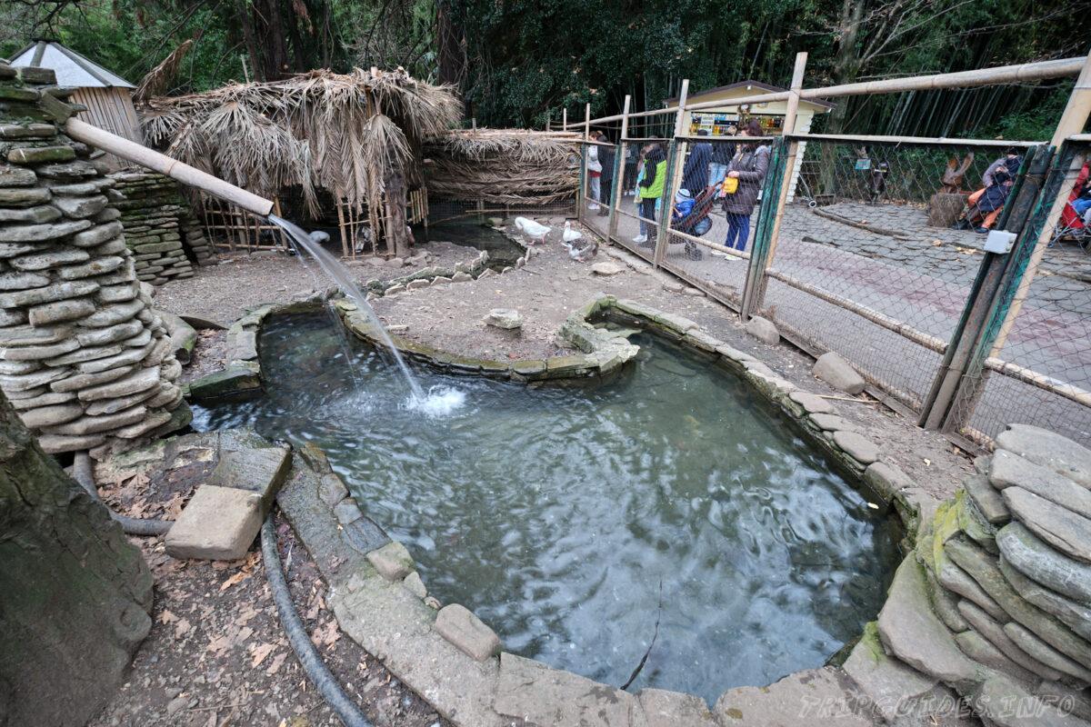 Сочинский дендрарий - нижний парк - гуси
