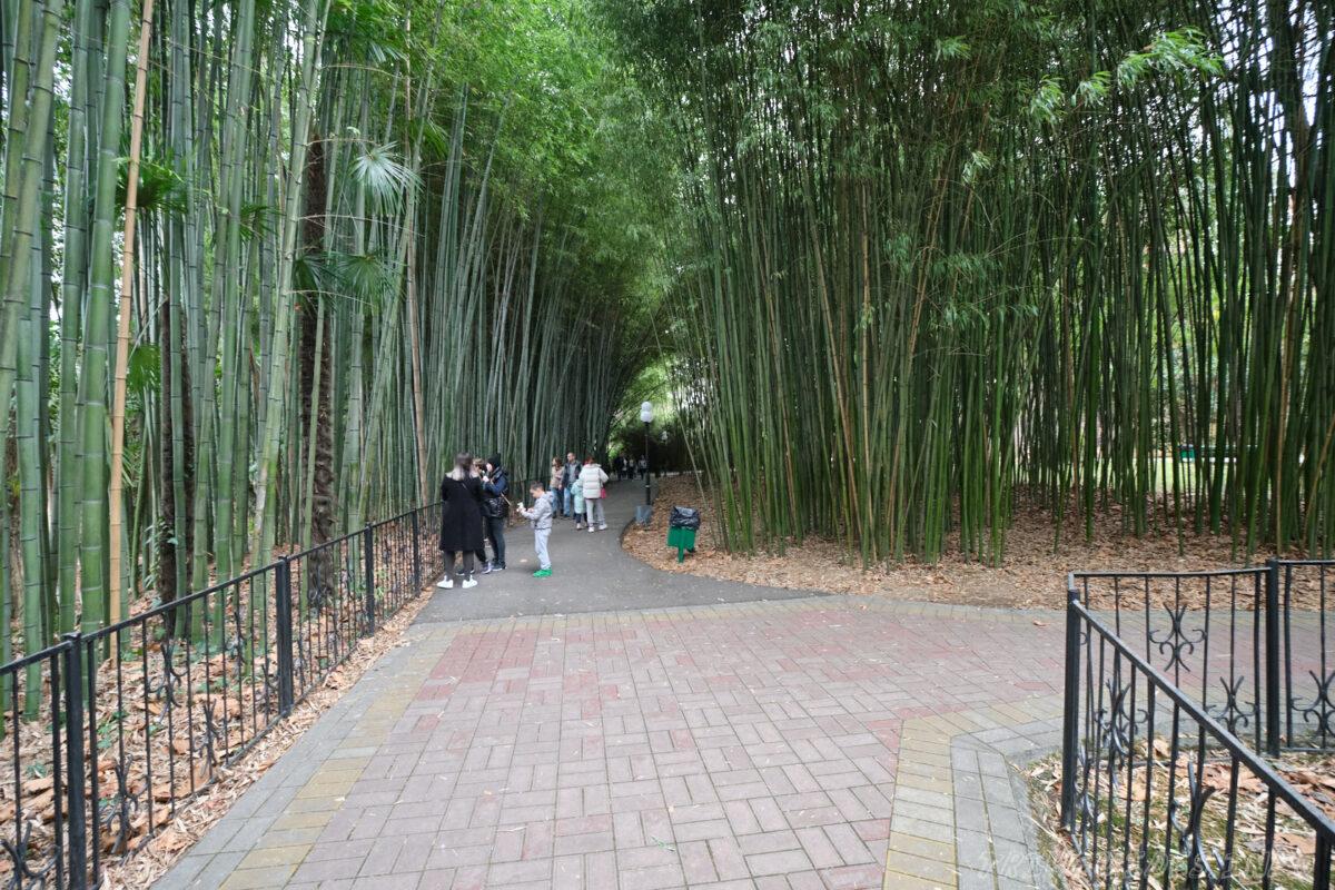 Сочинский дендрарий - нижний парк - бамбуковая аллея
