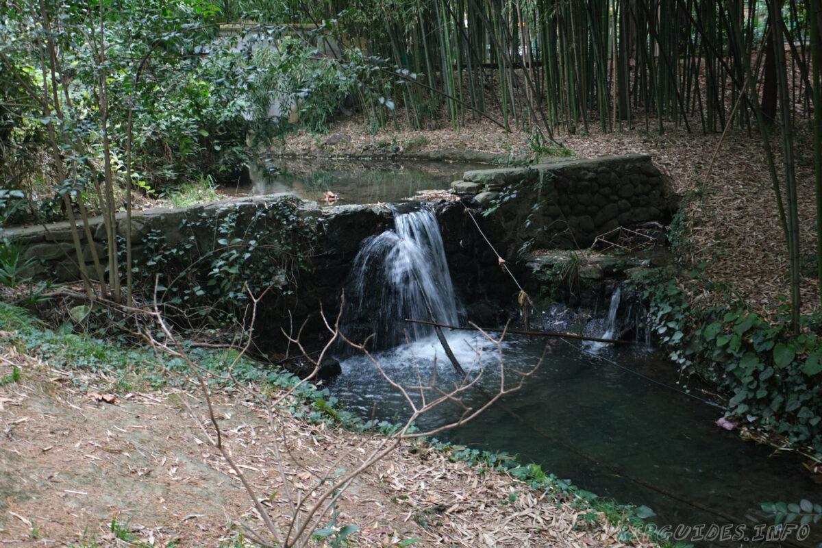 Сочинский дендрарий - нижний парк - водопад