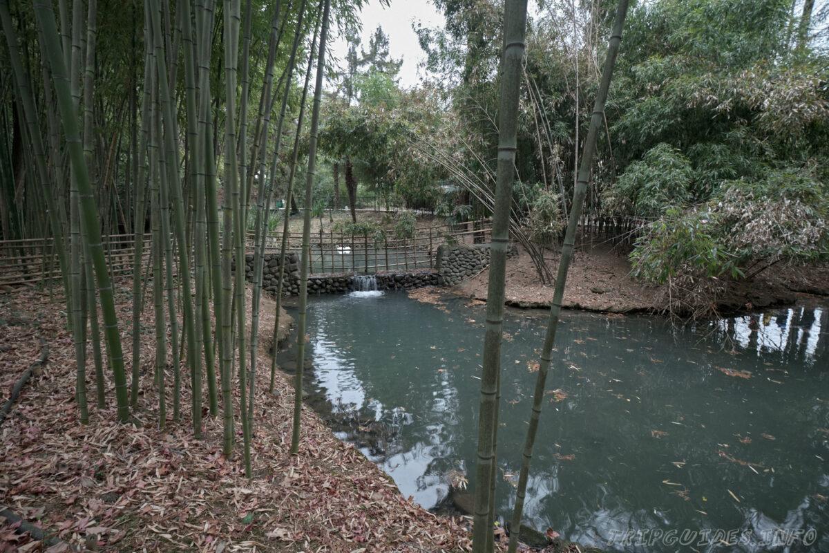 Сочинский дендрарий - нижний парк - водопад в зарослях бамбука