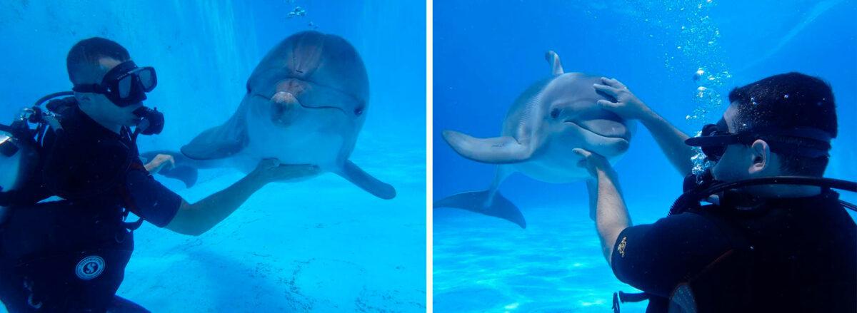 Дайвинг с дельфинами - Дельфинарий «Немо» в Анапе