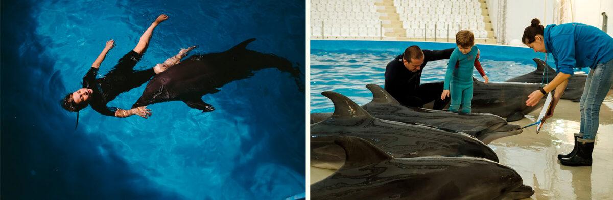 Дельфинотерапия - Дельфинарий «Немо» в Анапе