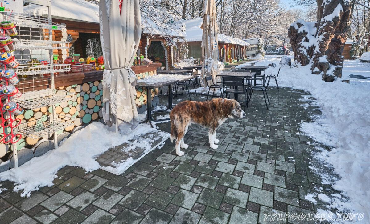 Собачка - Гора Ахун зимой - Сочи