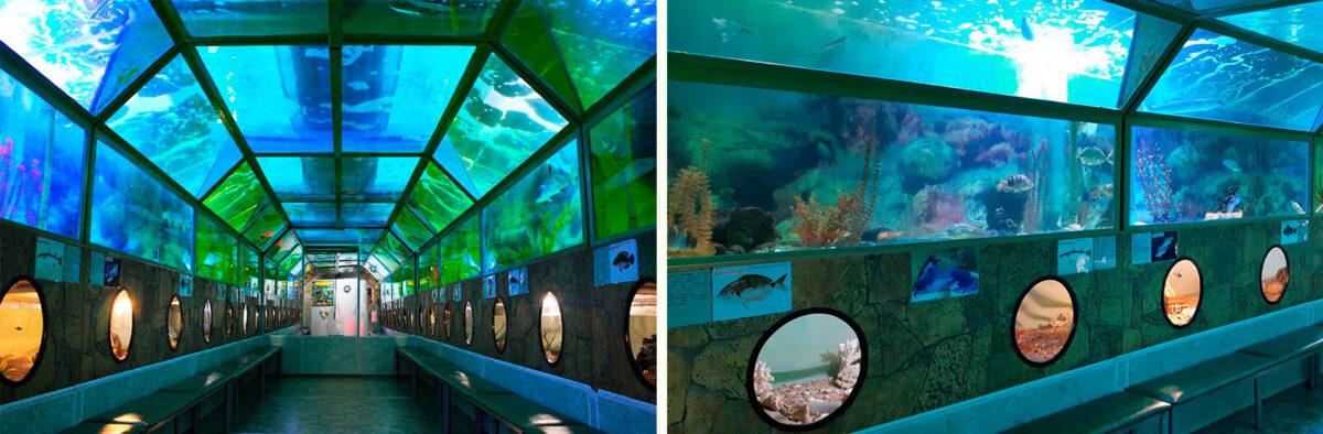 Морской туннельный аквариум «Батискаф» в Анапе