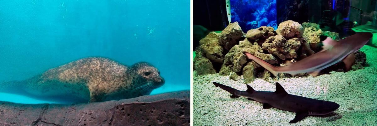 Океанариум - Дельфинарий «Немо» в Анапе