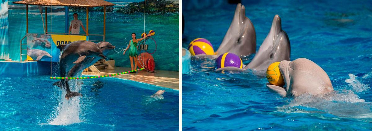 Шоу дельфинов - Дельфинарий «Немо» в Анапе