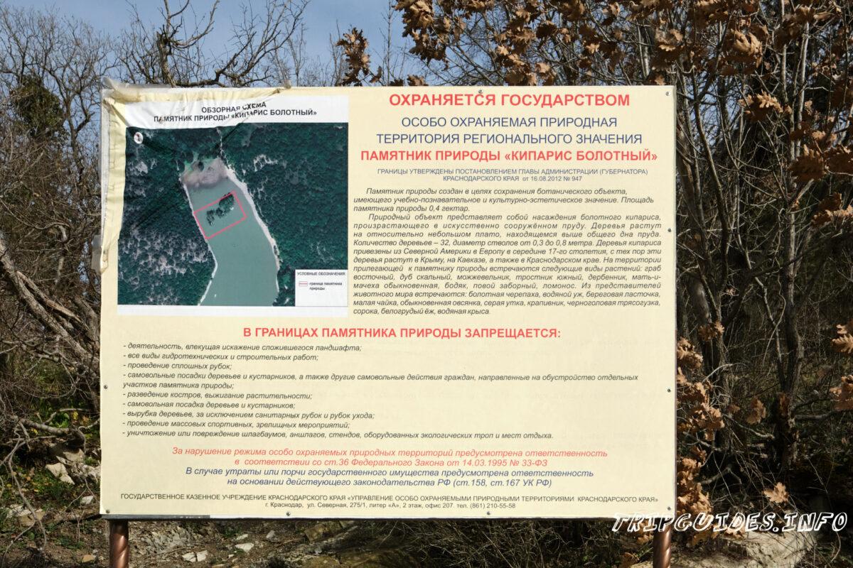 Кипарисовое озеро в Сукко - болотные кипарисы