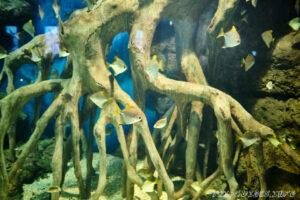 Океанариум Sochi Discovery World в Сочи