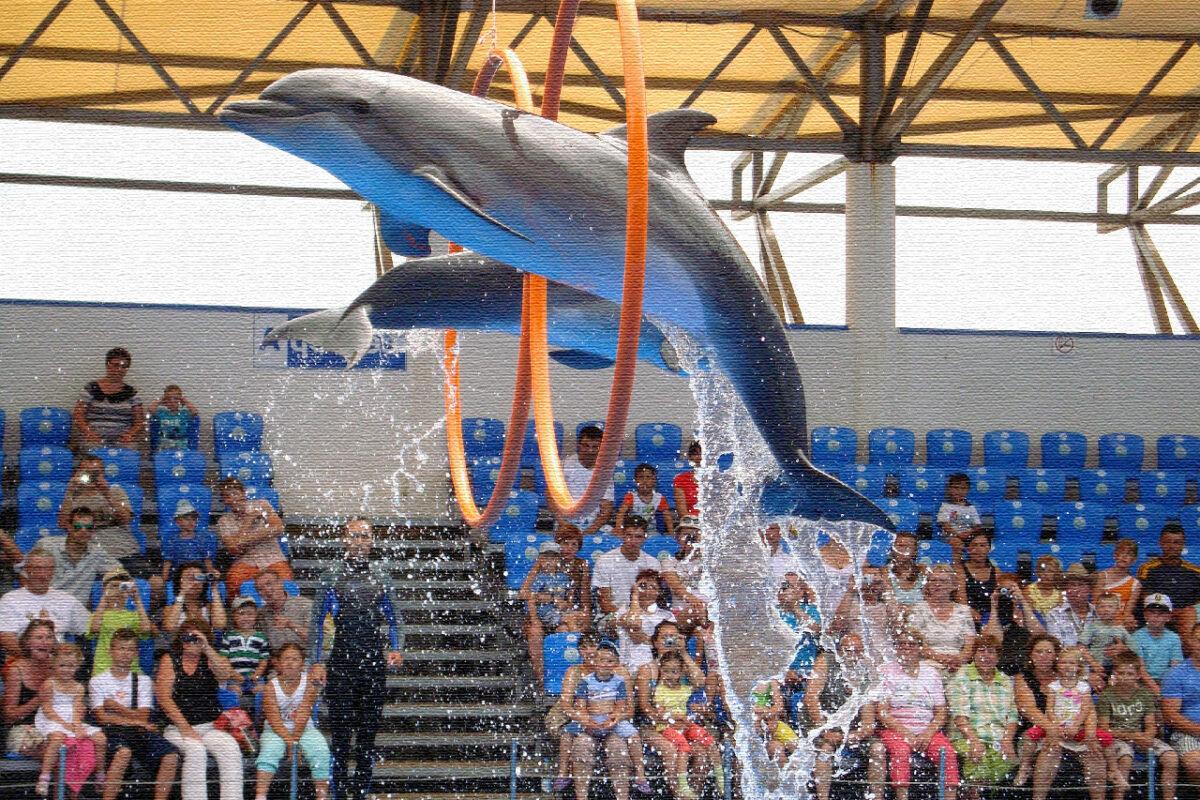 Утришский дельфинарий в Утриш - Краснодарский край, Россия