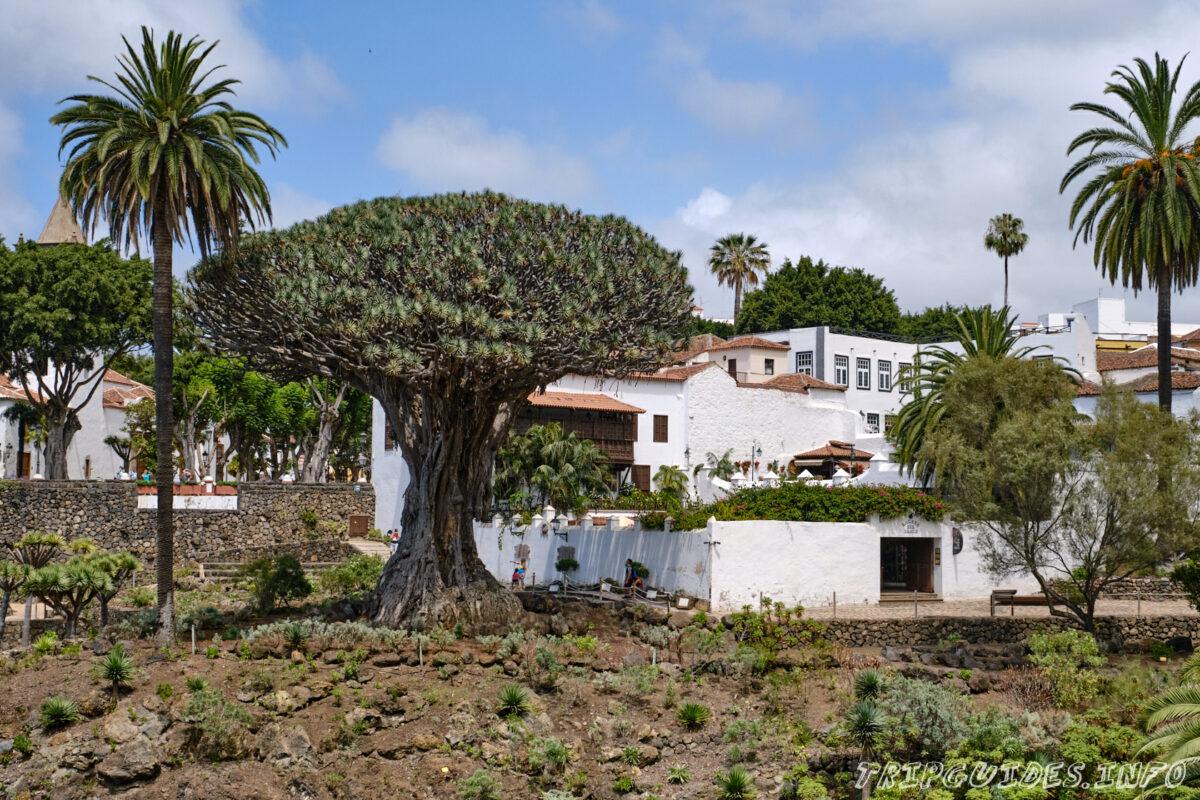 Парк Драго и Драконовое дерево в Икод-де-Лос-Винос на Тенерифе