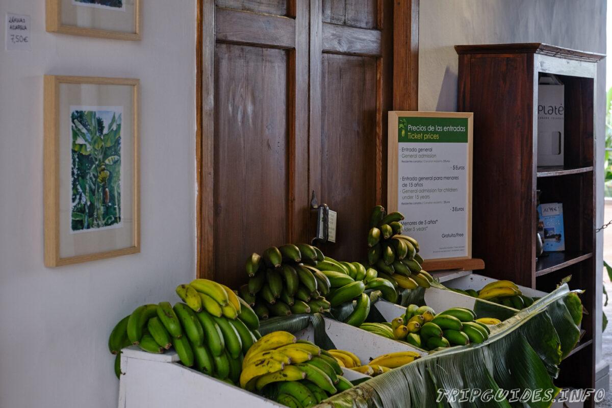 Банановая ферма в Икод-де-Лос-Винос на Тенерифе в Испании