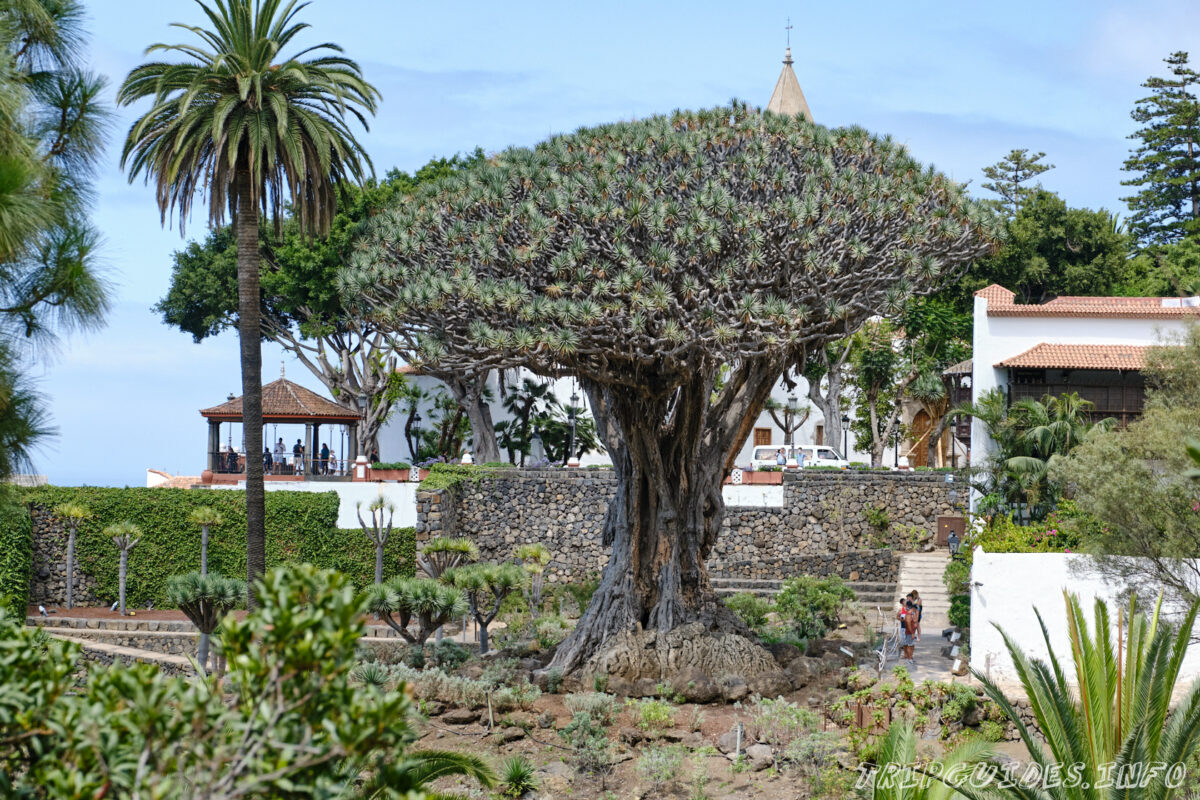 Парк Драго (Драконового дерева) Икод-де-Лос-Винос Тенерифе