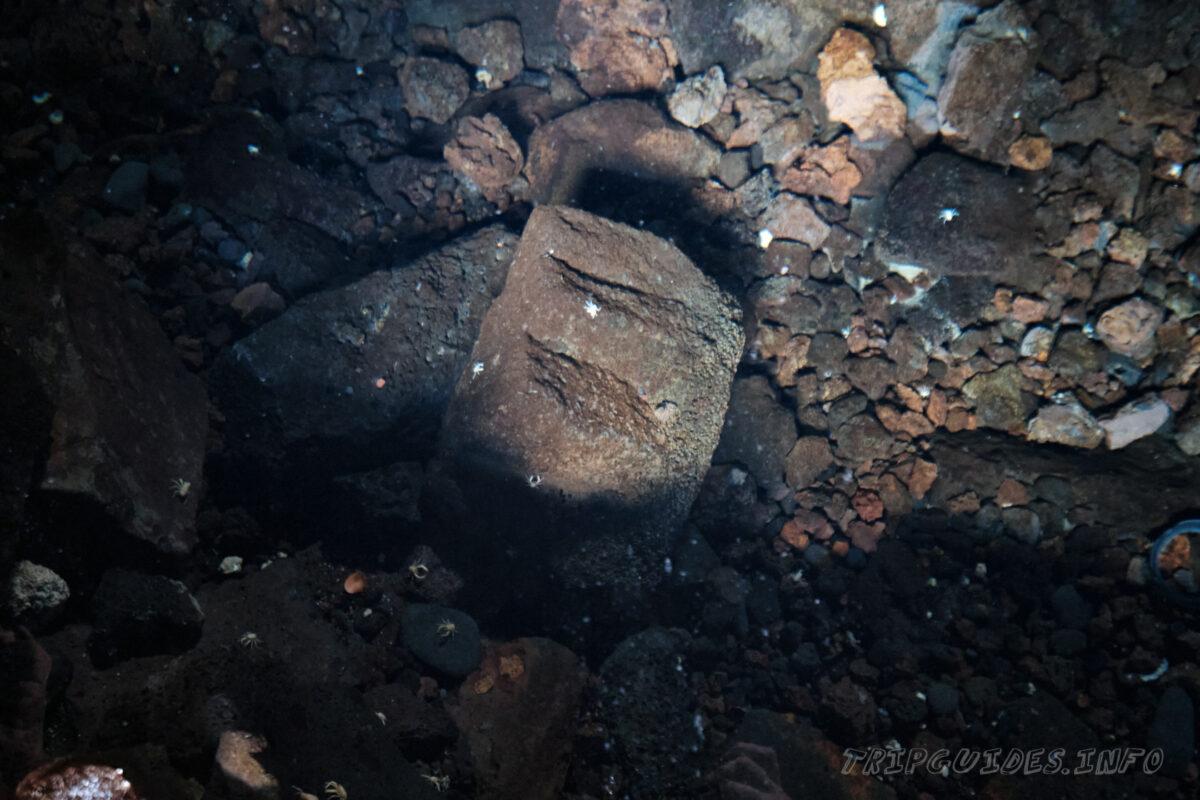 Белые крабы - Пещера Хамеос-дель-Агуа на Лансароте